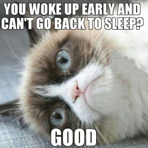Grumpy Cat. From www.indulgy.com